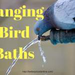 hamging bird bath and water feeder reviews