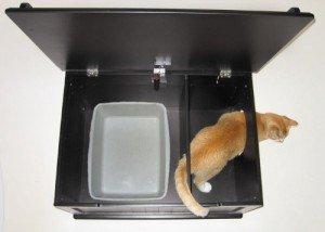 cat box open