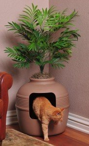 plant litter box