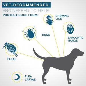 Bayer Seresto vet recommended